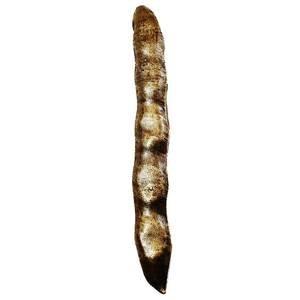 Modern Objects Oversized Bean Pull in Antique Brass