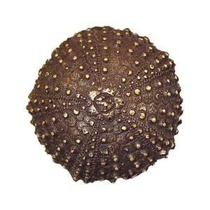 Modern Objects Mini Urchin Knob in Antique Brass