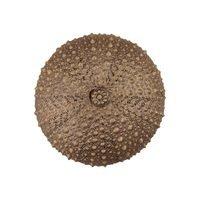 "Acorn MFG - Artisan - 1 1/2"" Sea Urchin Knob in Museum Gold"