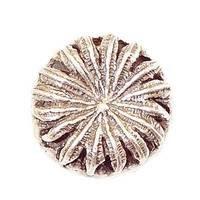 Modern Objects - Pinecones & Jasmine - Poppy Knob in Antique Brass