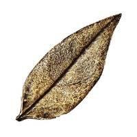 Modern Objects - Pinecones & Jasmine - Jasmine Leaf Knob in Antique Brass