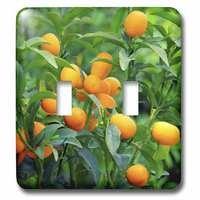 Jazzy Wallplates - Scenic - Double Toggle Wallplate With Kumquat Fruit Tree