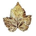 Modern Objects - Pinecones & Jasmine - Silver Maple Knob in Antique Brass