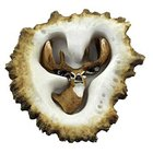 Sierra Lifestyles - Resin Antler Design - Elk Burr Pull Whitetail Deer Vertical